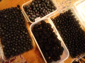 blueberry06