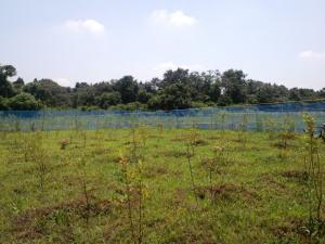 山下ナチュラ農園